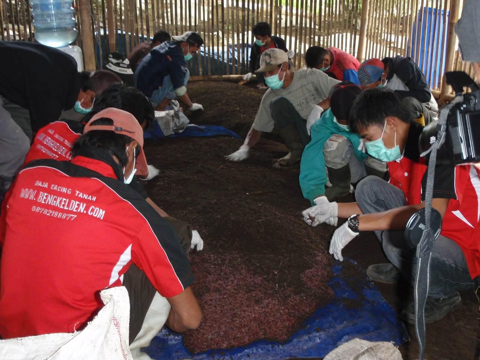 penyebaran cacing tanah