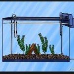Cara BENAR Memelihara Ikan Mas