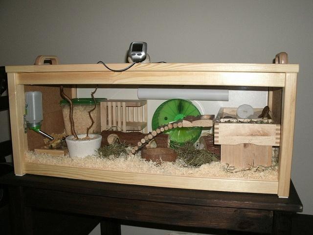kandang hamster 1