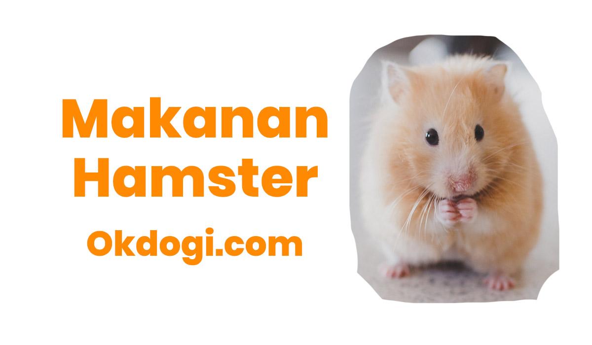 13 Pilihan Makanan Hamster Paling Mantul Okdogi Com