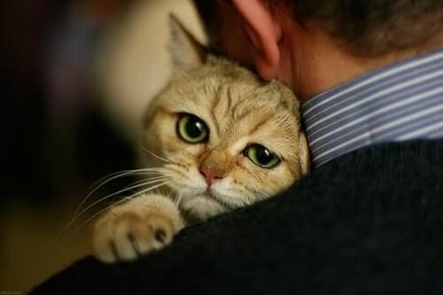 cara menjinakan kucing