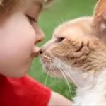 Perawatan berbeda kucing berdasarkan tipenya