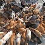 37 Jenis kucing ras yang paling lucu, LENGKAP!
