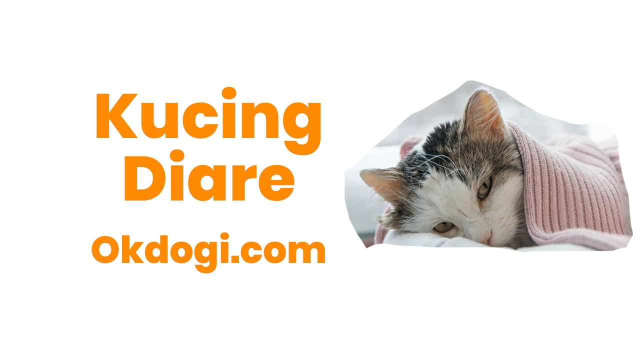 Kucing Diare / Mencret : Penyebab dan Cara mengobati