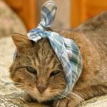 Beberapa penyebab utama kucing mati mendadak