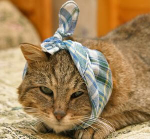 kucing sakit 2