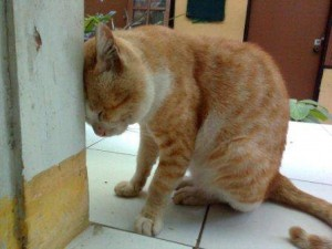 kucing stress