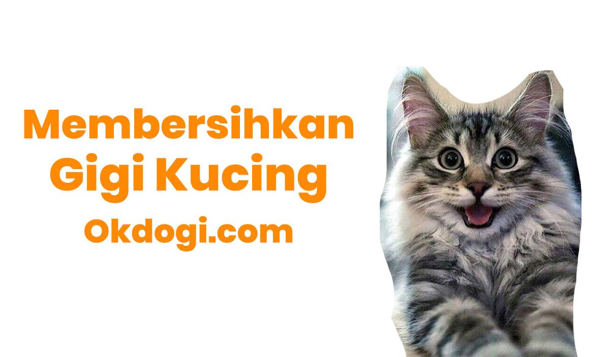 cara membersihkan gigi kucing
