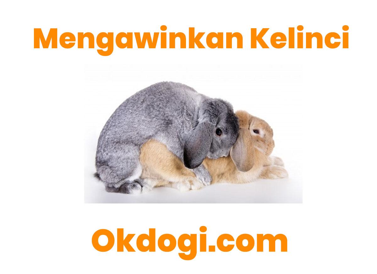 4 Kunci Sukses Cara Mengawinkan Kelinci, WAJIB BACA!