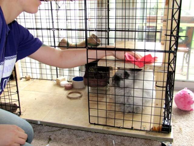 Perawatan anakan kelinci dibawah 2 bulan