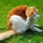 8 Jenis kutu yang menjadi ancaman kucing anda