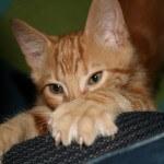 7 ragam masalah dari kebiasaan unik kucing