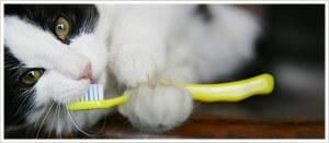 menyikat gigi kucing
