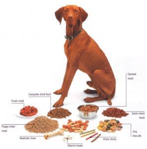 Food dog