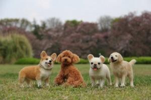 Kumpulan anjing lucu