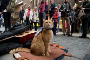 street cat bob