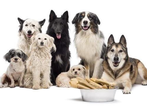 Cara merawat anjing yang baik itu butuh ketelatenan