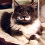 Hasil voting kucing terlucu dan terkenal di dunia!!