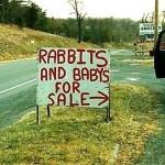 Pedoman membeli kelinci, perhatikan harga dan kualitasnya!