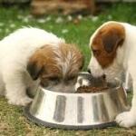 Bingung pilih makanan anjing? baca artikel ini dahulu