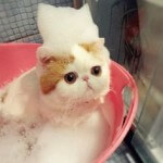 Belajar perawatan grooming kucing anda sendiri dirumah!