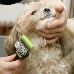 Perawatan bulu anjing