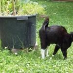 Panduan cara melatih kucing pee ( pipis )