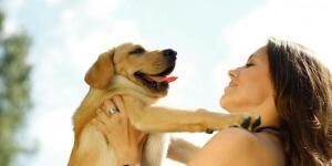 Reward untuk anakan anjing