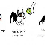 Memahami maksud dari bahasa tubuh anjing