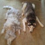 Selidiki penyebab bulu anjing rontok dan solusi mengatasinya