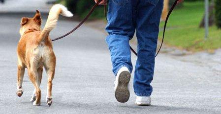 cara melatih anjing berjalan bersama