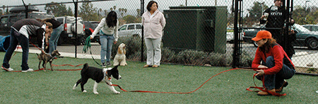 cara melatih anjing untuk mengahampiri kita