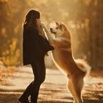 Membahas lengkap profil anjing akita