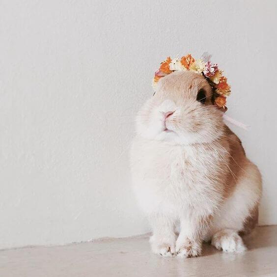 Gambar + foto + metode awal memelihara kelinci lucu