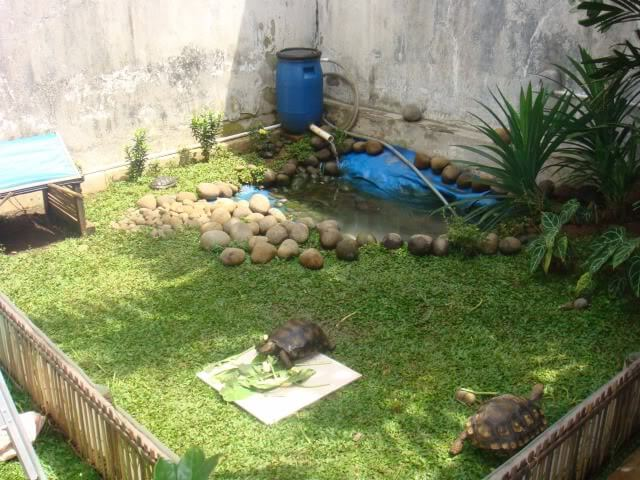 kandang kura-kura
