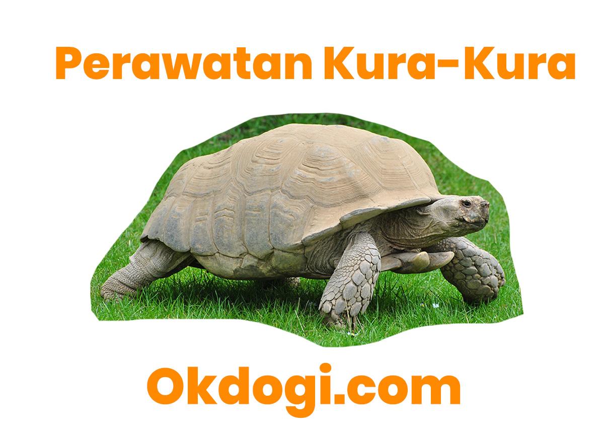 cara merawat kura-kura
