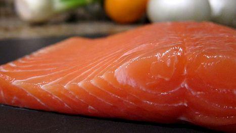 ikan salmon untuk anjing