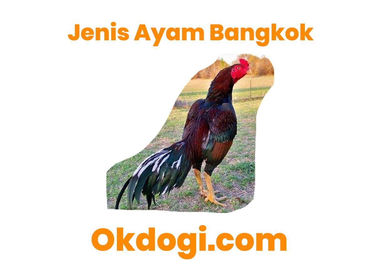 8 Jenis Ayam Petarung Aduan Paling Gaco, LENGKAP!
