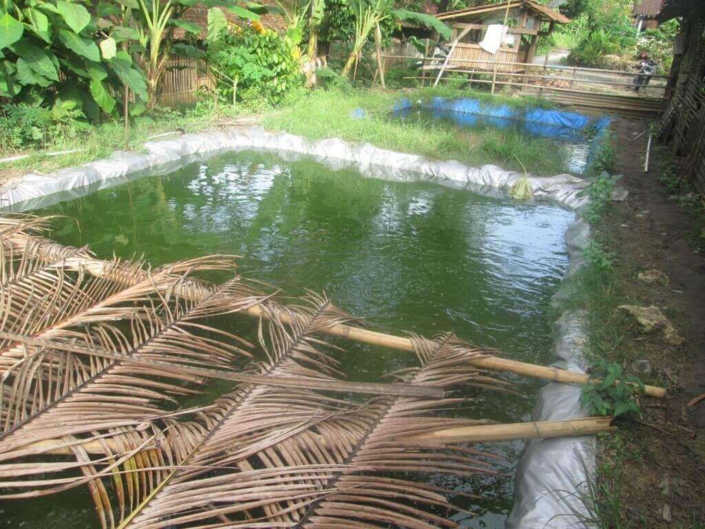 lahan-kolam-lele