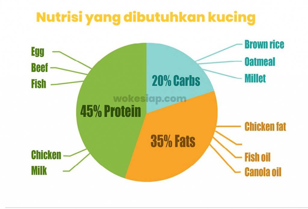 3 komponen nutrisi untuk makanan kucing