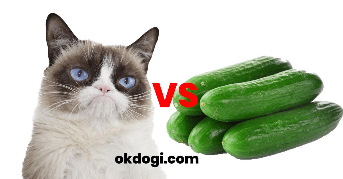 Kenapa Kucing Takut Mentimun? Berikut Alasannya