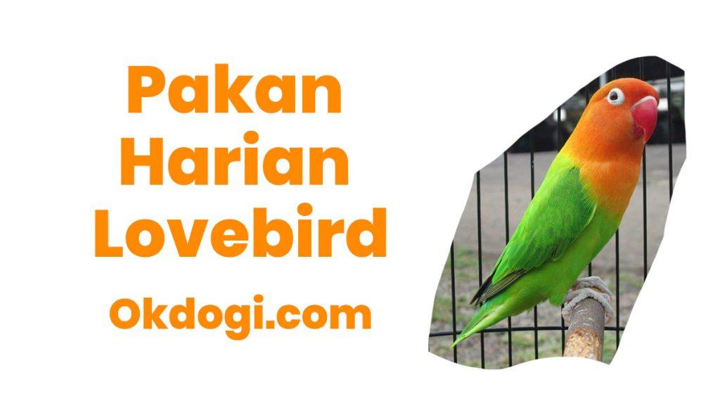 20 Pilihan Makanan Harian Burung Lovebird Gacor Mantul