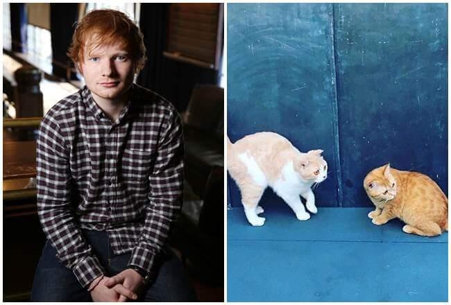 101 Daftar Nama Keren Dan Cantik Untuk Kucing Peliharaan