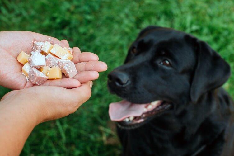 Anjing Keracunan : Ciri, Penyebab dan Cara Mengobati