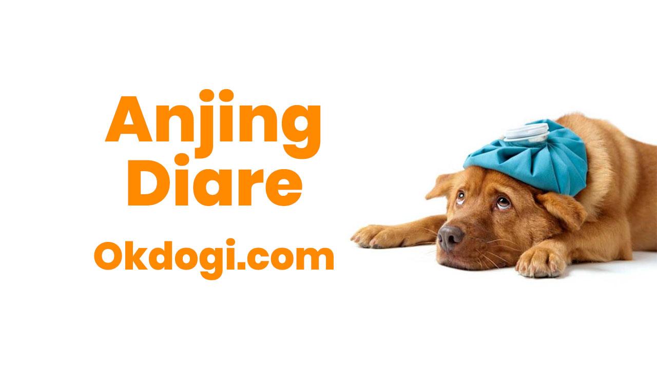 Anjing Diare ( Mencret ) : Penyebab & Cara Mengobati