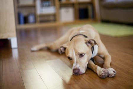 penyebab anjing diare