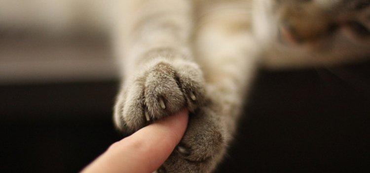 bahaya bulu kucing untuk manusia