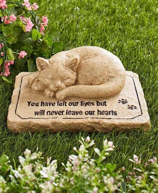 cara mengubur kucing