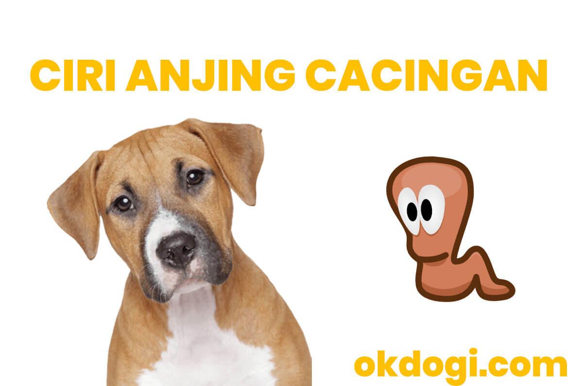 Anjing Cacingan : Ciri, Penyebab dan Cara Mengobati