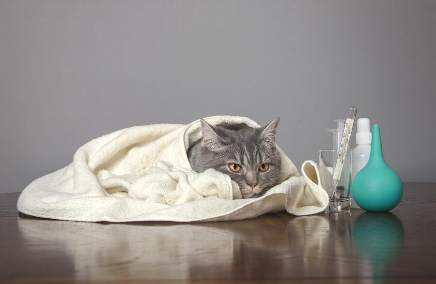 ciri kucing flu